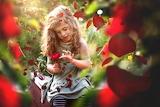 Flower, summer, nature, rose, petals, girl, child