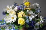 Bouquets Cosmos