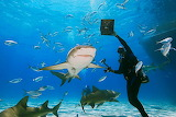 scuba diver with sharks