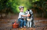Animal, basket, dog, boy, fruit, box, child, husky, grenades, do