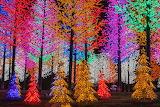 Forêt de sapins-couleurs