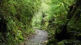 Abo Foresttrail, Japan