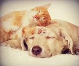 Sleeping-pets-dog-cat-cute