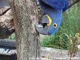 Perroquet bleu qui dévisse / blue parrot unscrewing a nut