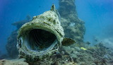 Sea-fish-animals-underwater