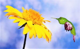 Green Chili Hummingbird