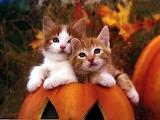 KittensInAPumpkin