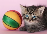 I want a smaller ball
