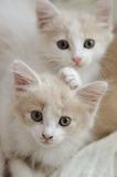 duo of damanging kittens