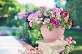 Pot, flowers, plant, garden, pink color, nature