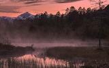 River grass fog