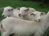 Sheepish expression..........................................x