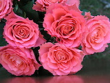 #Bouquet of Roses