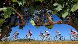Cycling-bicycle-bikes-fruits-grapes-vine