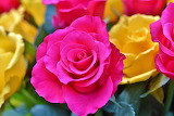 Colours-colorful-roses