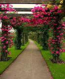 Garden Path Pergola Boganvillas