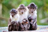 Kid nature monkey