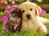 #Sweet Kitty and Puppy
