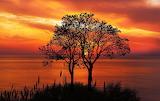 Sea, trees, sunset, sky, clouds, nature, colorful, seascape