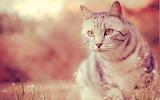 Cat-field-look