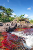 Can o Cristales River Colombia