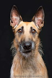 worried dog