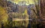 Forest reflections in the lake