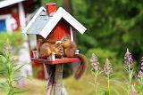 Squirrels, animals, little house for food, nature