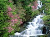 140130_Beautiful-Amazing-Waterfall-Flowers-Japan-HD-Wallpapers_1