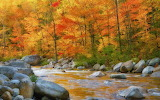 Nature-autumn-river-rocks-gold-color-foliage-trees-forest