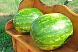 Melon - Síndria