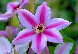 La Flor - The Flower