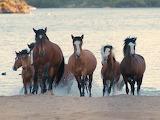 Wild Horses (6)