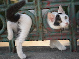 ^ In and out cat