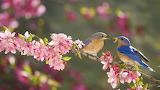 Spring bluebird breakfast