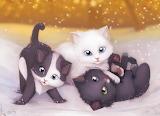 Cute-Kittens-kittens-16155336-900-655