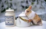 Adorable-bunny