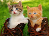 ☺♥ Adorable friends...