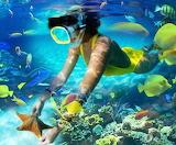Snorkeling with beautiful fish