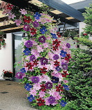 Trellis of Flowers