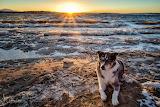 Dog snow sunlight