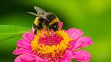 Nectar Collecter