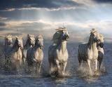 Wild Horses (7)