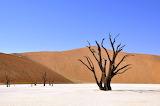 Tree desert namibia