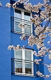 BlossomAndBlue_Studyjunkie