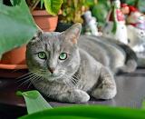 Green eyes watching you