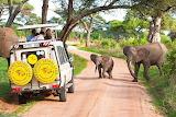 Safari car, elephants