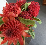 Waratah and Protea bunch bought at roadside stall