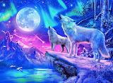 wolf-im-nordlicht