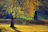 Jesień-foto-Barbara Radziszewska Fotografia